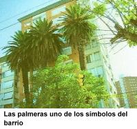 Palmeras del barrio Villa Mitre