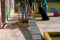 Zooterapia en Parque Roca