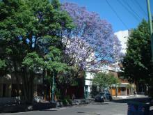 """""""Nubes lilas en el cielo de mi barrio"""" por Mabel Crego"""