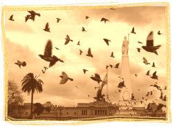 palomas en la Plaza de Mayo