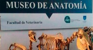Museo de Anatomia