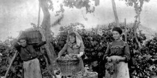 Bialet Massé - Italianas cosechando en Mendoza