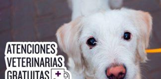 Atención veterinaria y Vacunación antirrábica el próximo fin de semana en la Ciudad