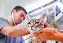 Atenciones Veterinarias gratuitas entre 23 y 25 de agosto