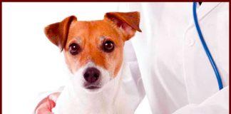 Atención veterinaria y vacunación del 19 al 22 de septiembre