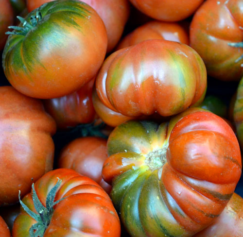 tomate Criollo